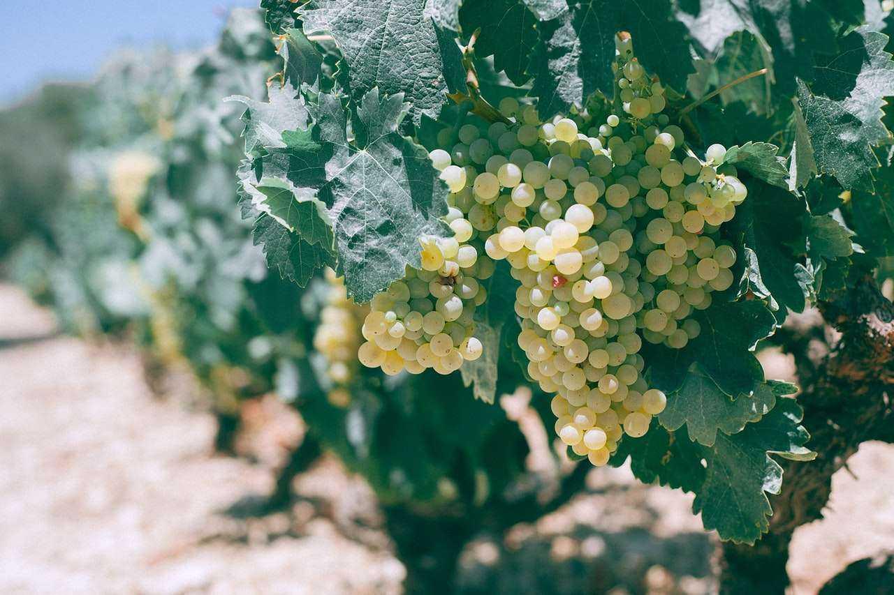 vinarija-zupski-podrum-01